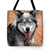 Siberian Husky With Blue And Brown Eyes Tote Bag
