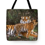 Siberian Tiger Cub Guarding Mom Wildlife Rescue Tote Bag