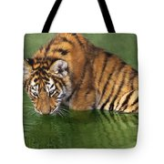 Siberian Tiger Cub In Pond Endangered Species Wildlife Rescue Tote Bag