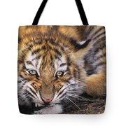 Siberian Tiger Cub Panthera Tigris Altaicia Wildlife Rescue Tote Bag