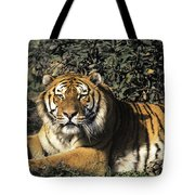 Siberian Tiger Endangered Species Wildlife Rescue Tote Bag