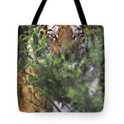 Siberian Tiger In Hiding Wildlife Rescue Tote Bag