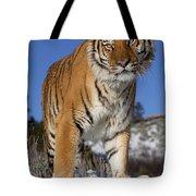 Siberian Tiger No. 1 Tote Bag