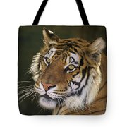 Siberian Tiger Portrait Endangered Species Wildlife Rescue Tote Bag