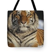 Siberian Tiger Portrait In Snow China Tote Bag