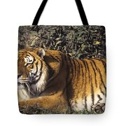 Siberian Tiger Stalking Endangered Species Wildlife Rescue Tote Bag