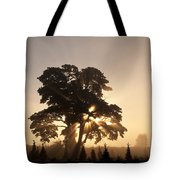 Silhouetted Tree With Sun Rays Tote Bag