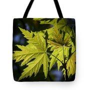 Silver Maple Tote Bag