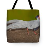 Silver Pheasant In Strutting Pose Tote Bag