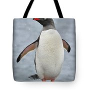 Simply Gentoo Tote Bag