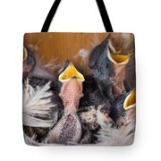 Singing For Supper Tote Bag by Bill Pevlor
