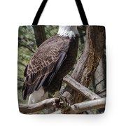 Single Bald Eagle Tote Bag