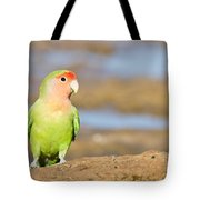 Single Love Bird Seeks Same Tote Bag