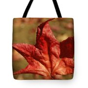 Single Red Maple Leaf Tote Bag