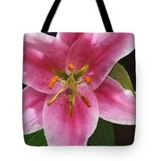 Single Stargazer Lily Tote Bag
