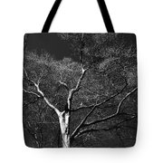 Single Tree With New Spring Leaves In Black And White Tote Bag