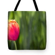 Single Tulip Flower On Green Background Tote Bag