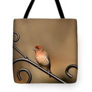 Sitting Pretty Red House Finch Tote Bag
