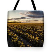 Skagit Daffodils Sunset Sunstar Tote Bag