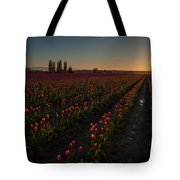 Skagit Dusk Tulip Fields Tote Bag