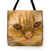 Skc 1483 Unconcerned Stare Tote Bag