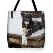 Skeeter The Sled Dog  Tote Bag