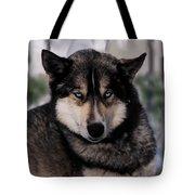 Sled Dog Resting Tote Bag