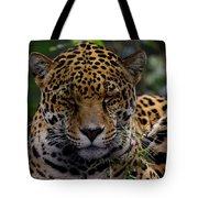 Sleeping Jaguar Tote Bag