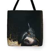 Sleeping Potbelly Pig Tote Bag