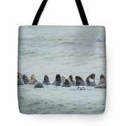 Sleeping Seals Tote Bag