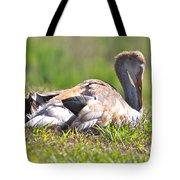 Sleepy Baby Sandhill Crane Tote Bag