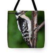Sleepy Woodpecker Tote Bag