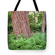 Slippery Elm And Ferns Tote Bag
