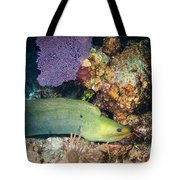 Slithering Moray Tote Bag