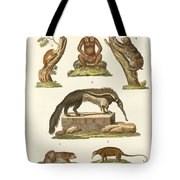 Sloths And Anteaters Tote Bag