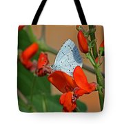 Small Blue Butterfly Tote Bag
