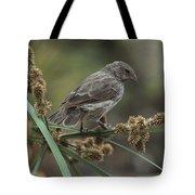 Small Ground-finch Female Feeding Tote Bag
