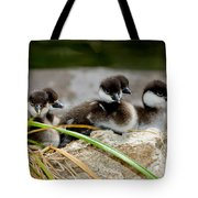 Smew Ducklings On Shore Tote Bag