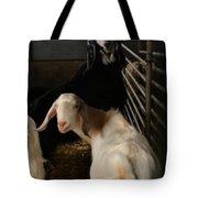 Smiling Goats  Tote Bag