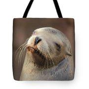 Smug Sea Lion Tote Bag