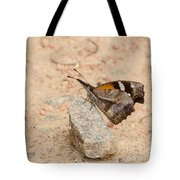 Snout Butterfly  Tote Bag