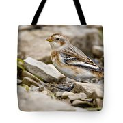 Snow Bunting Pictures 43 Tote Bag