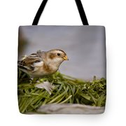 Snow Bunting Pictures 87 Tote Bag