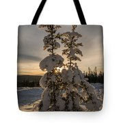 Snow Capped Sitka Spruce Tote Bag
