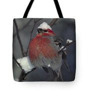 Snow Covered Pine Grosbeak Tote Bag