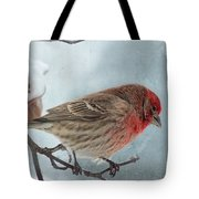 Snow Day Housefinch With Texture Tote Bag
