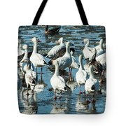 Snow Geese Discussion Tote Bag