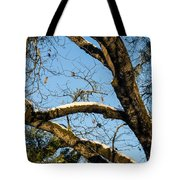 Snow In Oak Tote Bag