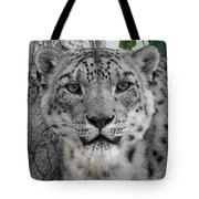 Snow Leopard 5 Tote Bag