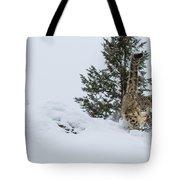 Snow Leopard Periscope Tote Bag